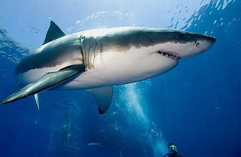 Những Lưu Ý Khi Sử Dụng Sụn Vi Cá Mập